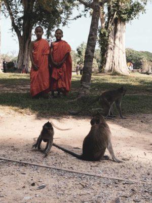 Monks and monkeys at Angkor Wat, Siem Reap, Cambodia