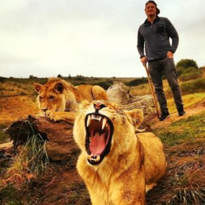 Walking with lions in Zimbabwe, Africa